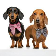 Designer Swarovski Dog Collar Australia