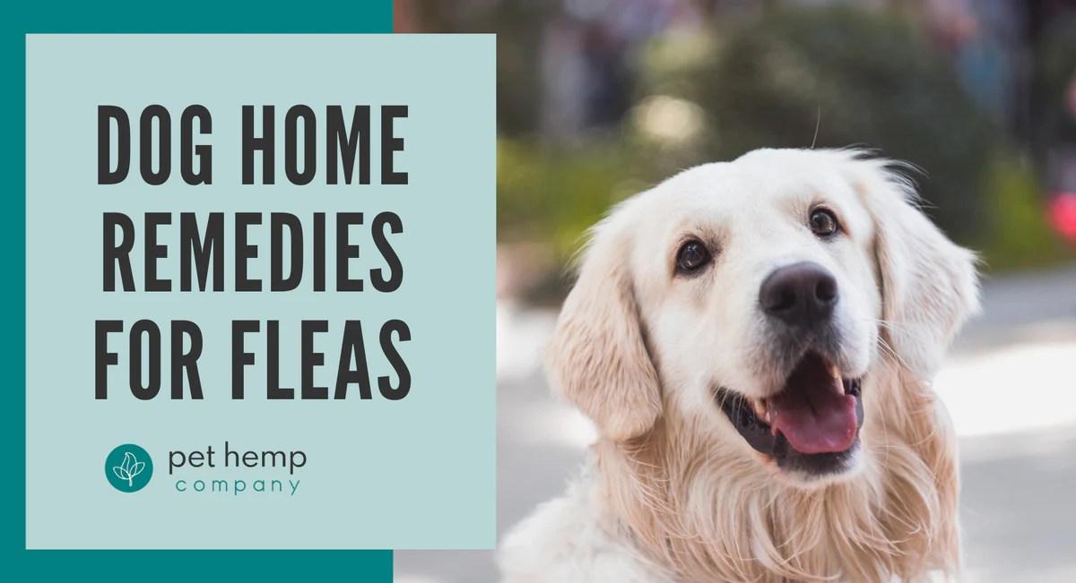 Dog Home Remedies For Fleas Pet Hemp Company