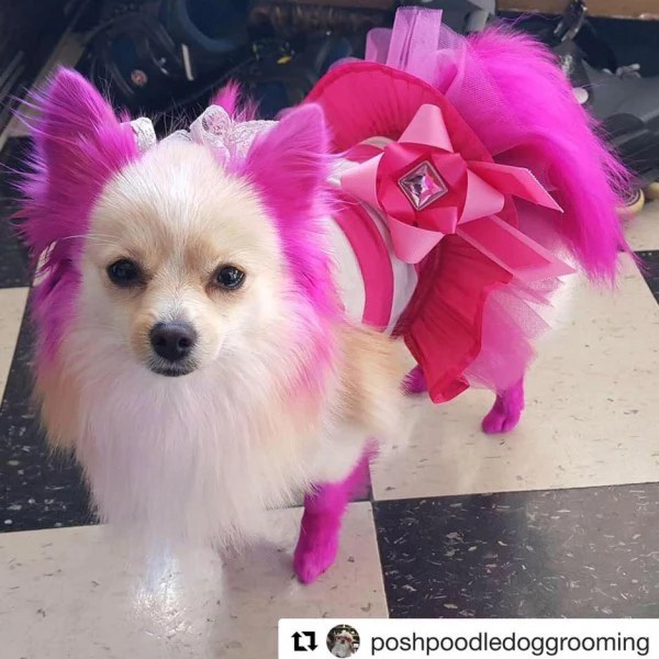 adorable pink dog hair dye opawz