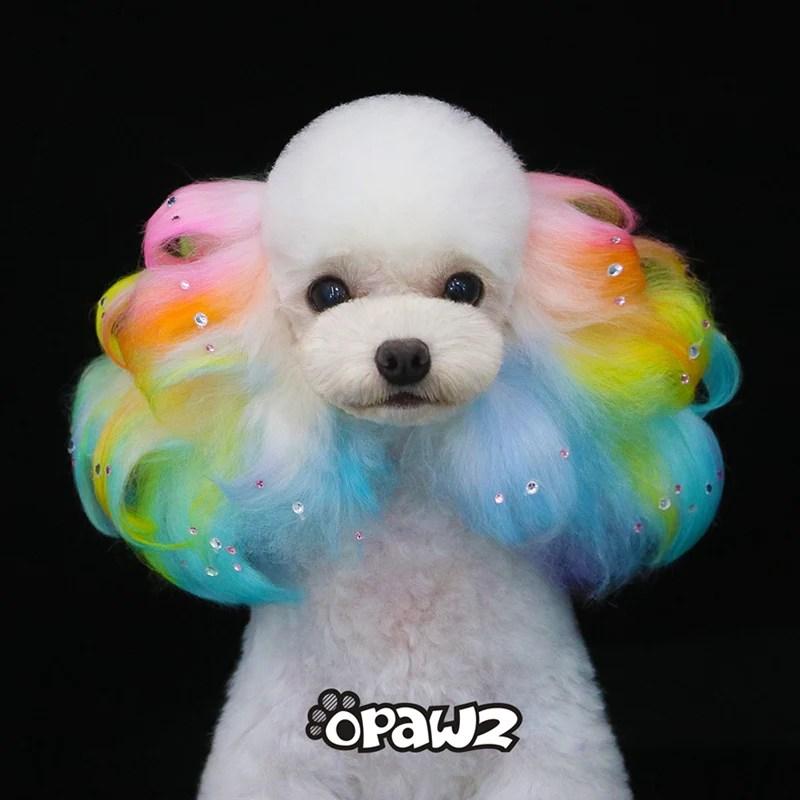 dog hair dye groomer starter