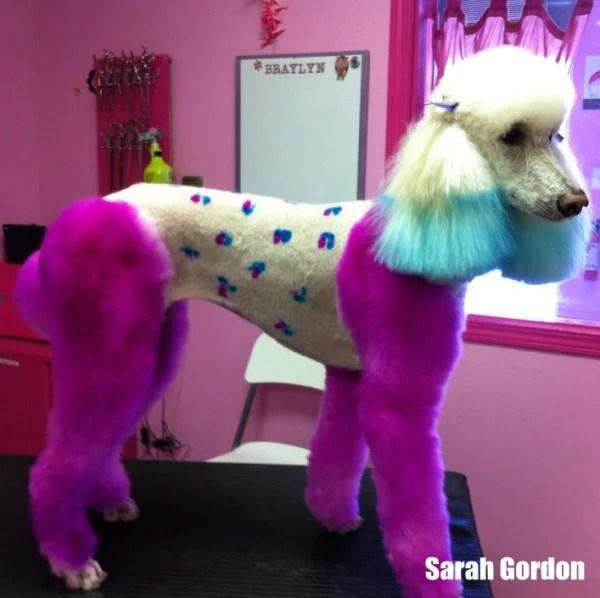 adorable pink dog hair dye opawz