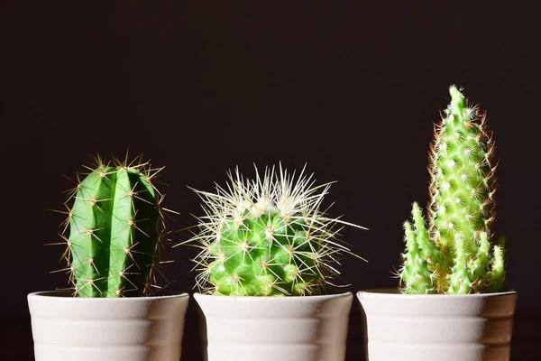 plantes grasses succulentes cactus 2
