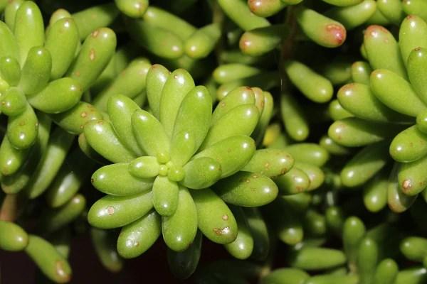 plantes grasses succulentes
