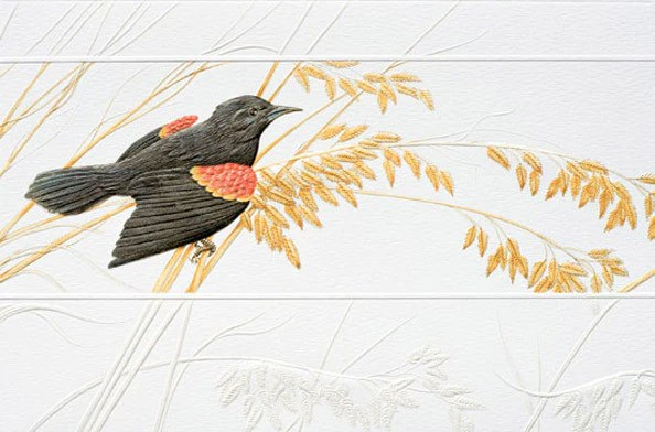 Pumpernickel Press Greeting Card RedWinged Blackbird