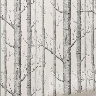 black white birch tree