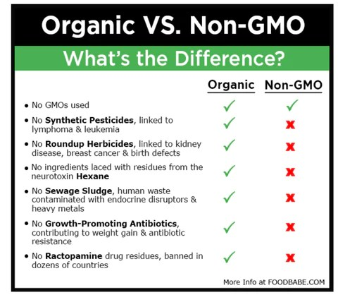 Seeds organic vs non organic