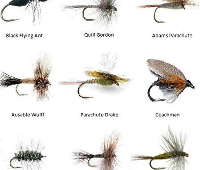Feeder Creek Fly Fishing Flies Assortment For Trout Fishing And Other Freshwater Fish  Dry