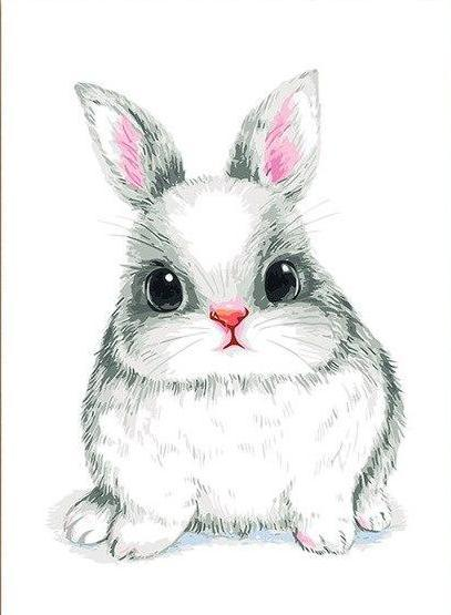 Cute Bunny Paint By Numbers Kit I Love Diy Art