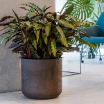 Buy A Large Straight Edged Black Indoor Plant Pot Online At Beards Daisies