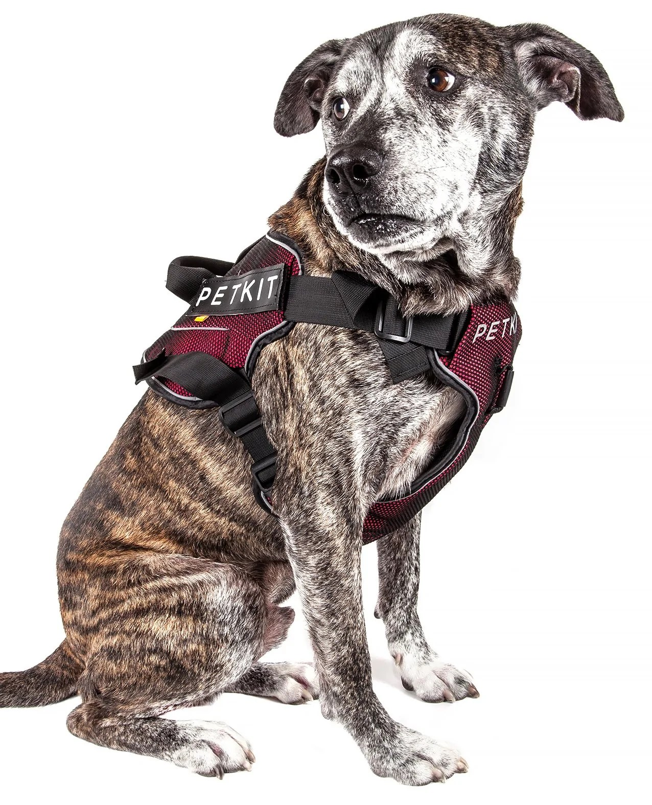 medium resolution of petkit air quad connecting adjustable cushioned chest compression dog harness doggy sauce
