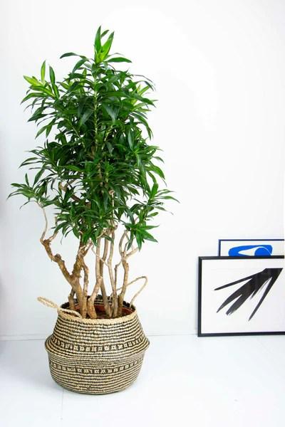 les plantes increvables
