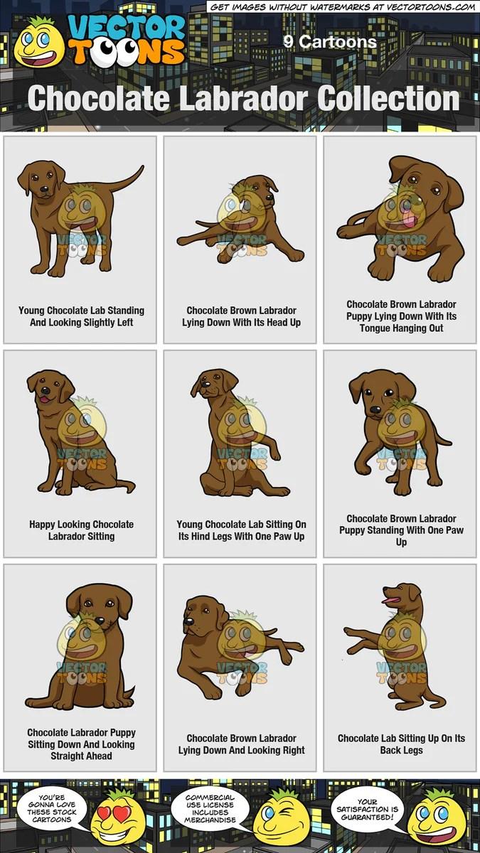 Chocolate Lab Cartoon : chocolate, cartoon, Chocolate, Labrador, Collection, Clipart, Cartoons, VectorToons