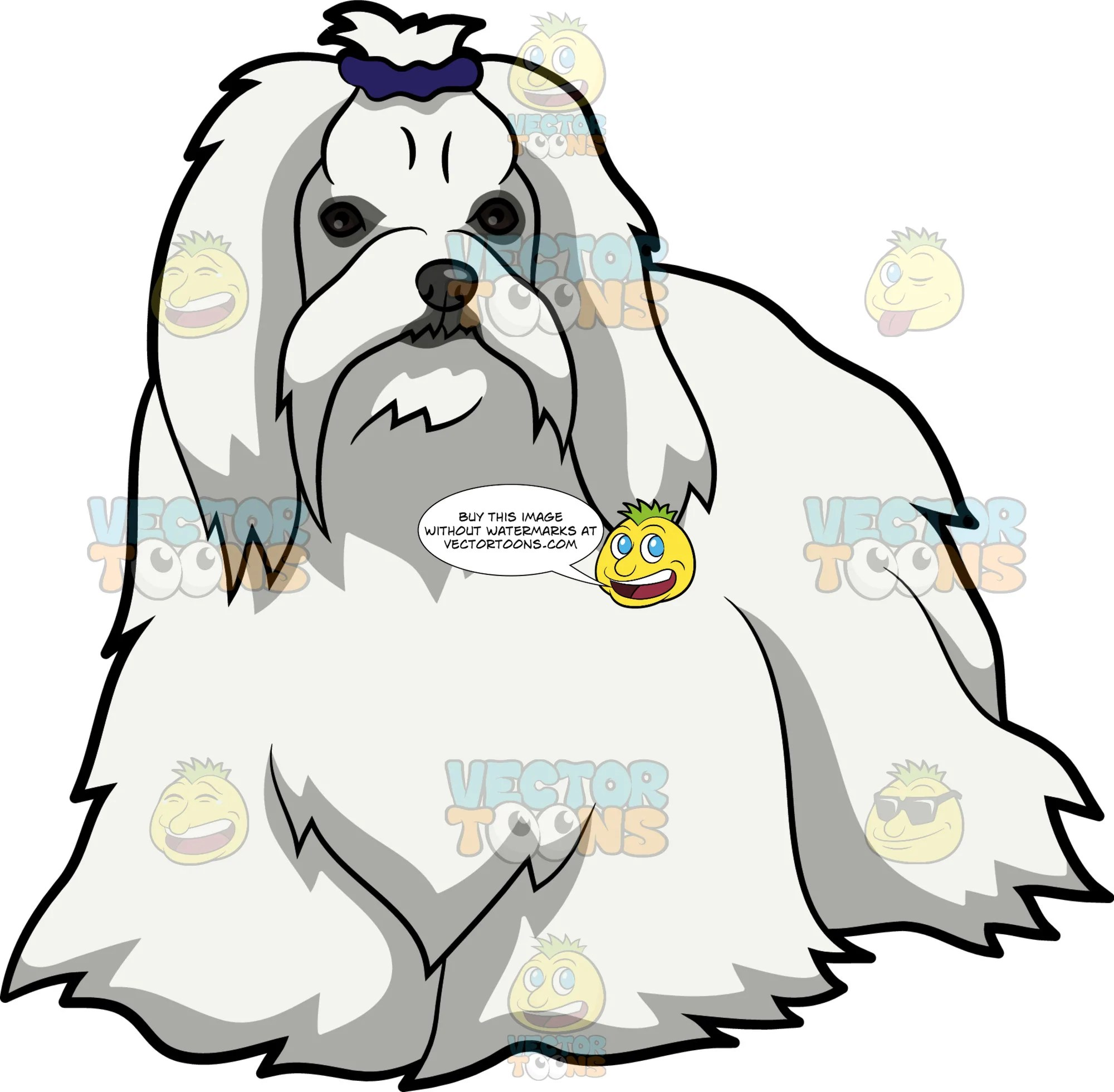 hight resolution of maltese clipart