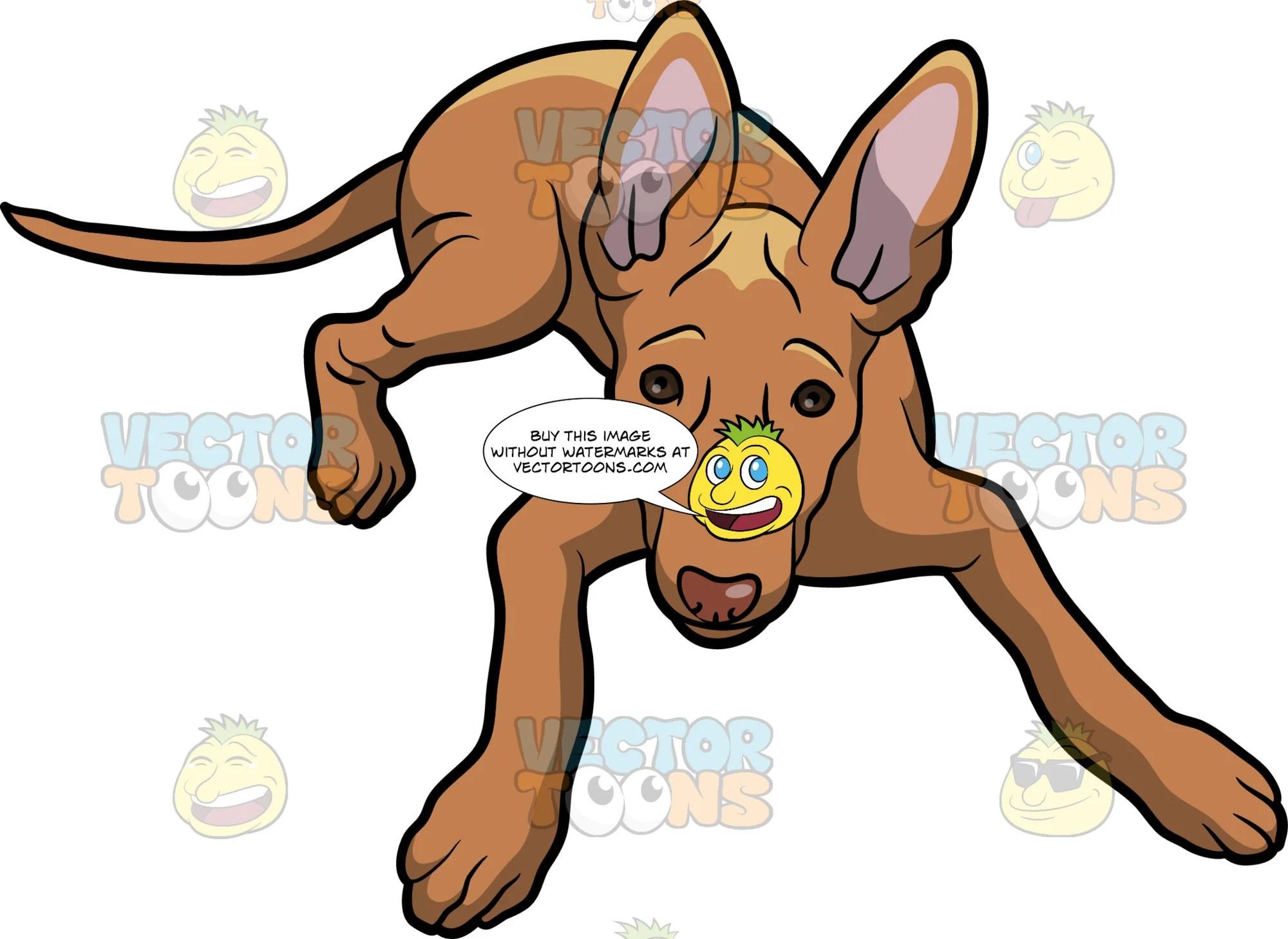 hound dog clipart [ 2000 x 1458 Pixel ]