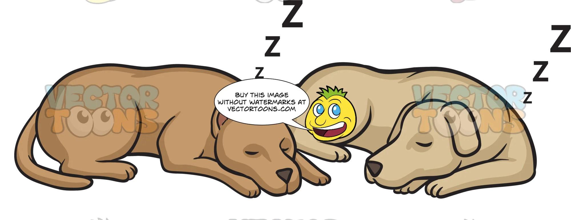 let sleeping dogs lie [ 2000 x 773 Pixel ]