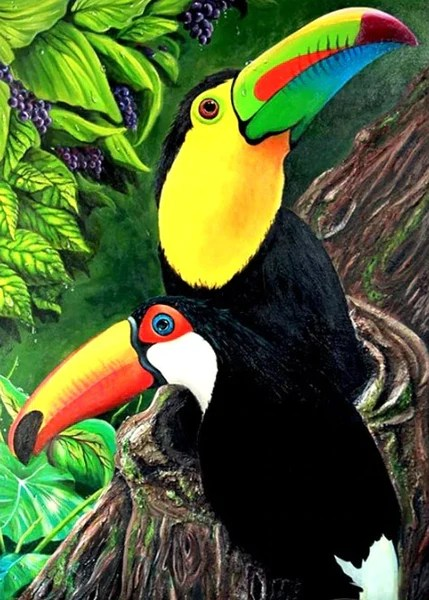 Picture Of A Toucan Bird : picture, toucan, Beautiful, Toucan, Birds, Diamond, Painting