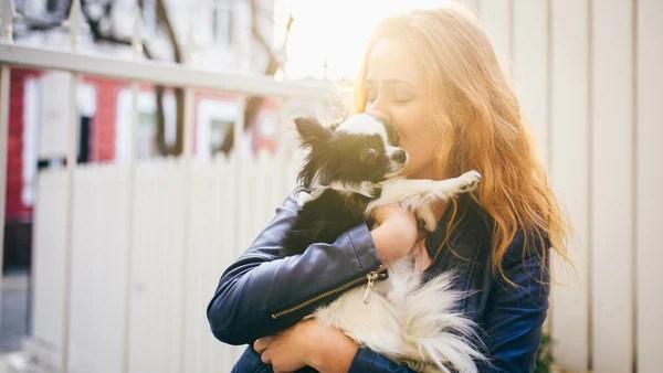 CBD and Pets
