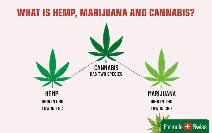 Cannabis-THC-CBD