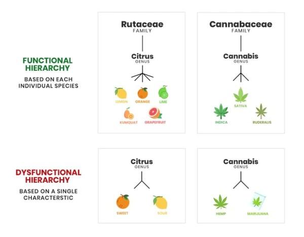CBD vs THC Difference explained