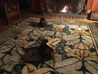 Wykehamist 1  Guildcraft Carpets