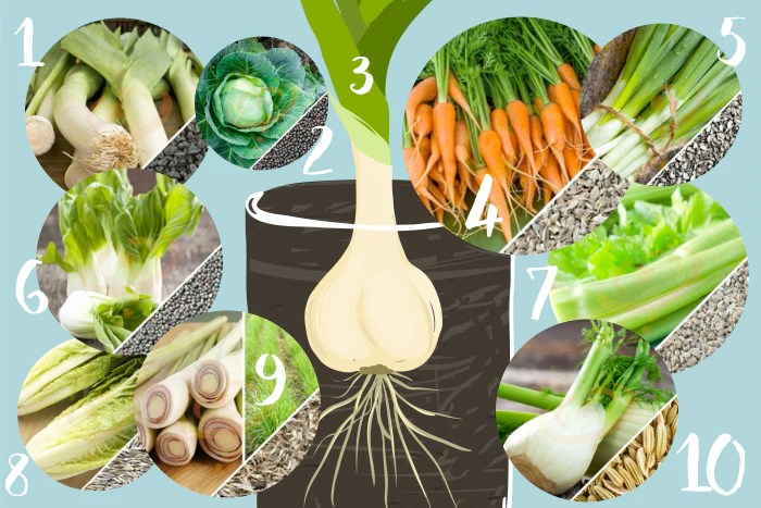 10 Vegetables You Can Re Grow In Water Seedsnow Com