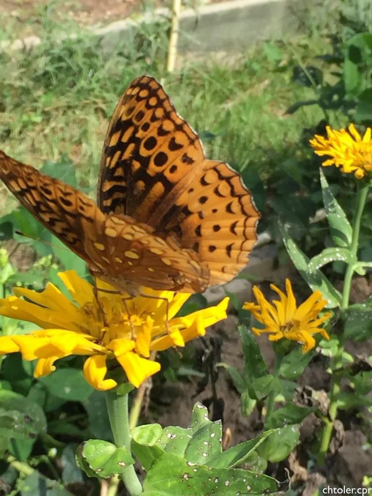 Butterfly And Hummingbird Garden Mix