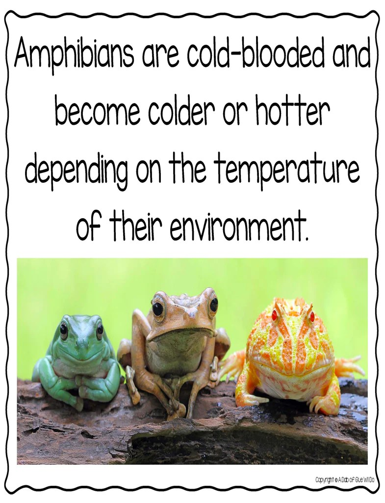 small resolution of Animal Groups and Animal Classification: Amphibians – A Dab of Glue Will Do