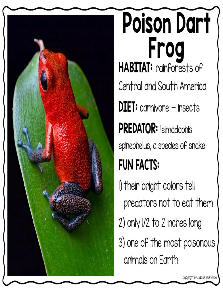 medium resolution of Animal Groups and Animal Classification: Amphibians – A Dab of Glue Will Do