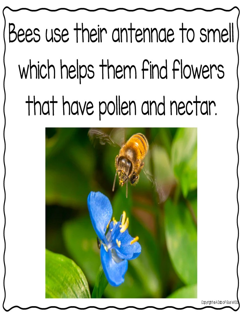 medium resolution of Honey Bees: An Animal Study – A Dab of Glue Will Do
