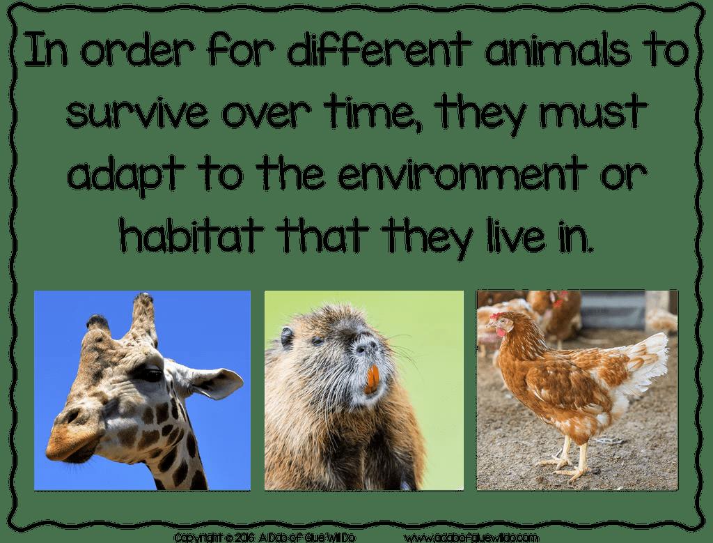 hight resolution of Animal Adaptations (PowerPoint