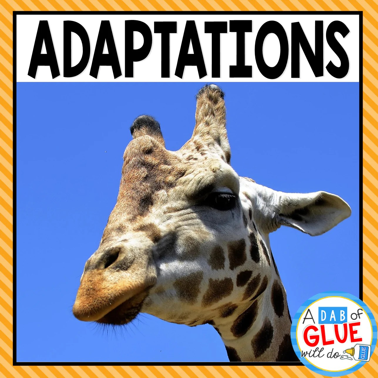 hight resolution of Animal Adaptations (PowerPoint