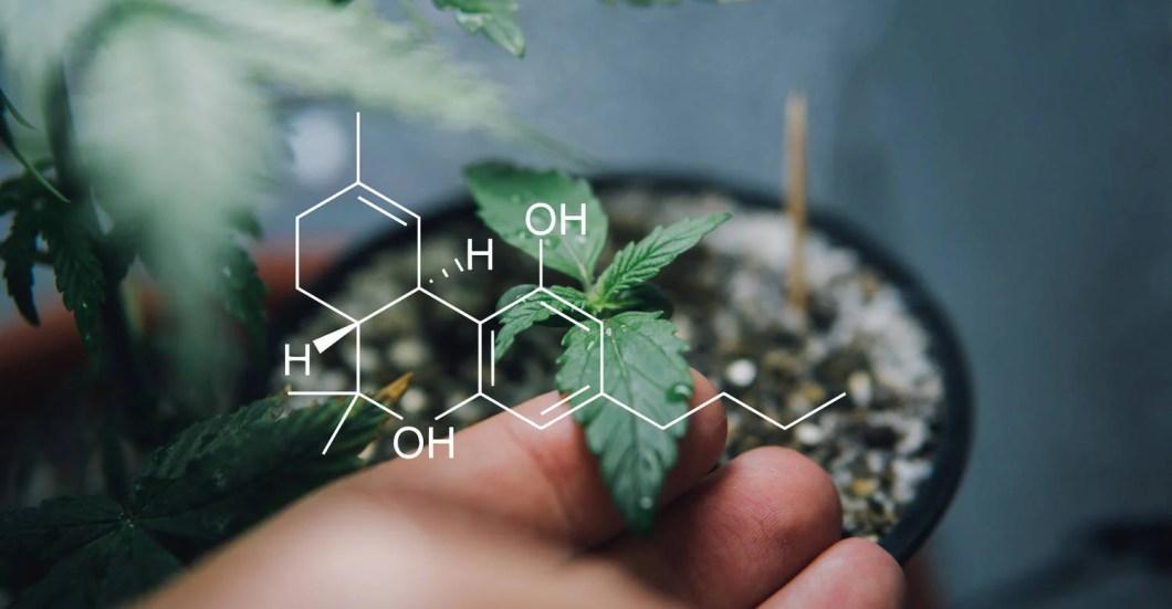 Endocannabinoidsystem