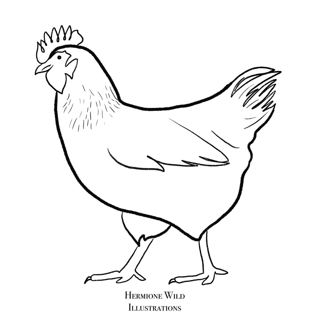 Chicken Colouring Sheet Hermione Wild Illustrations