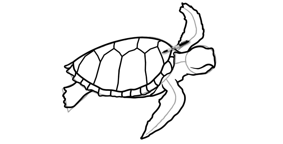 How To Draw A Turtle Step By Step Turtle Store