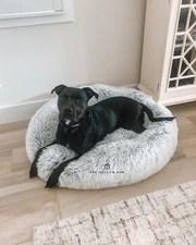 Ecowild Dog Bed : ecowild, Calming, (Regular, Size), Large, Orthopedic, Mellow