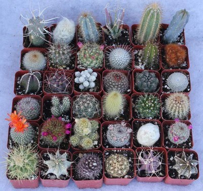 assorted cactus collection 9