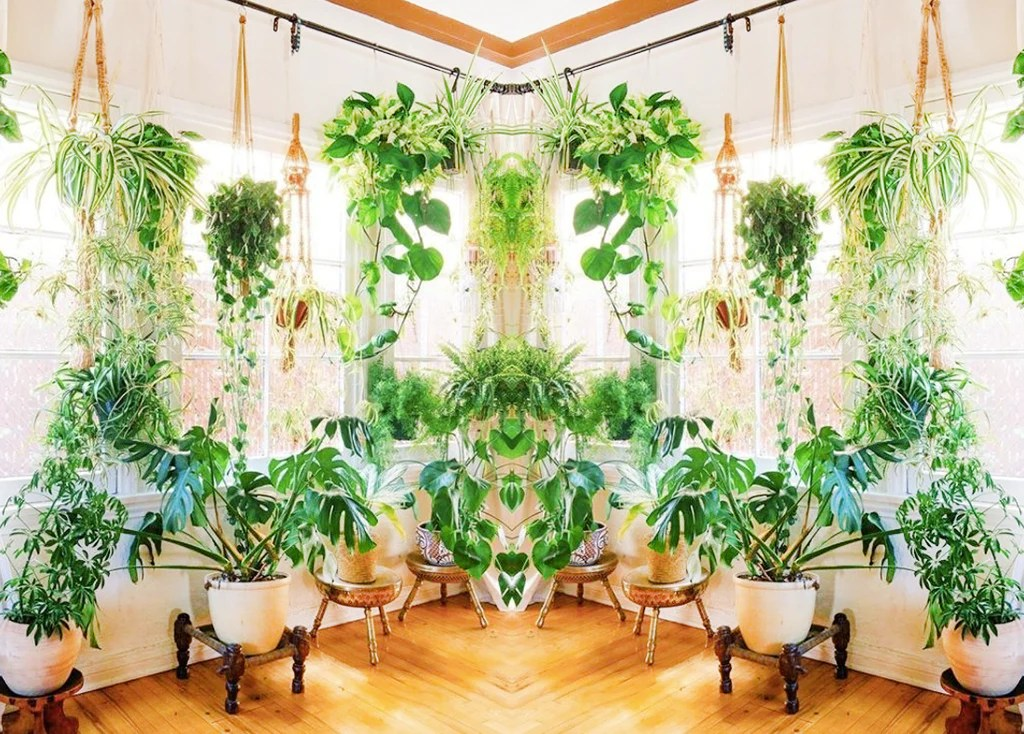 The Top 10 Hanging Indoor Plants Nearly Natural