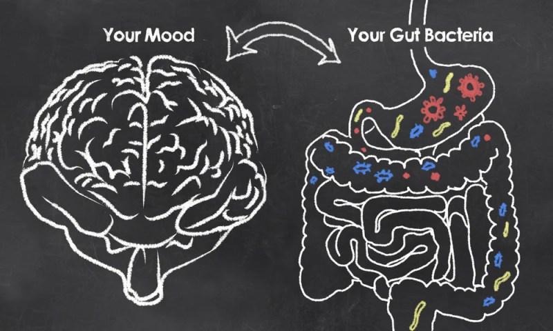 Best Prebiotic Supplement in 2021 for Optimal Gut Health
