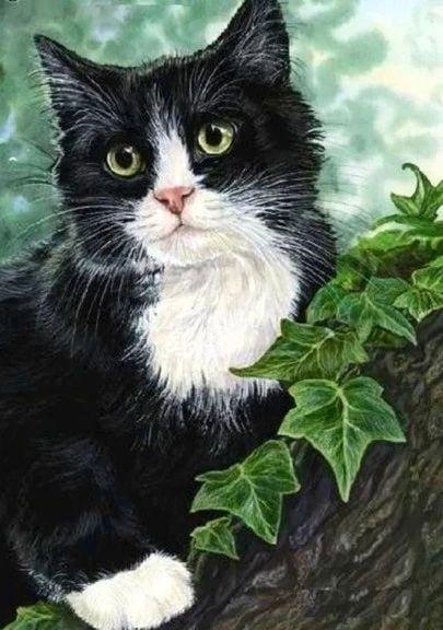 broderie diamant chat noir et blanc