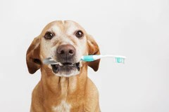 senior dog teeth cleaning