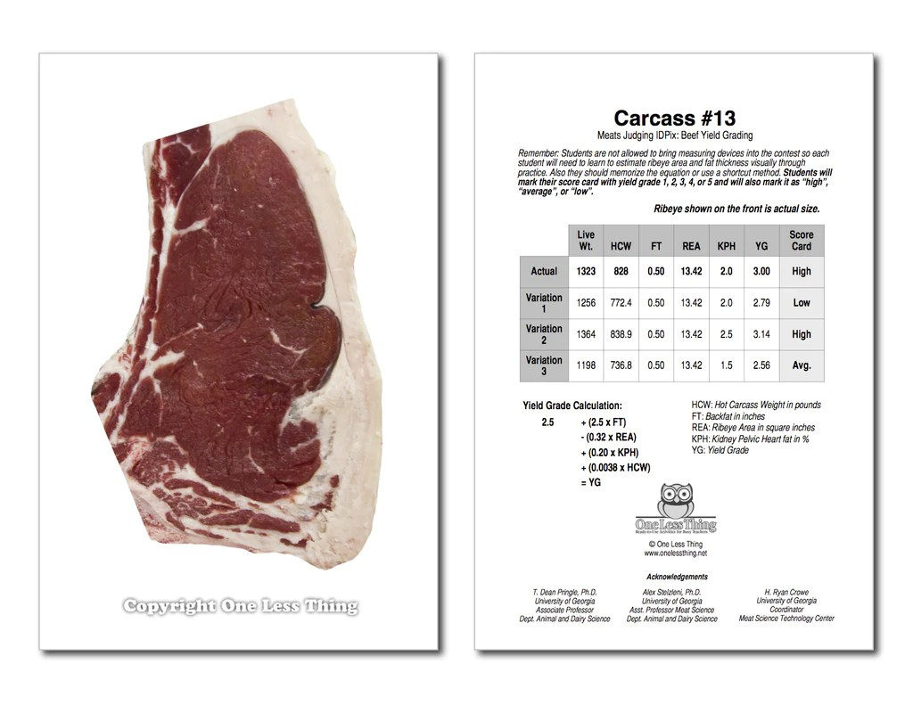 hight resolution of Beef Yield Grading