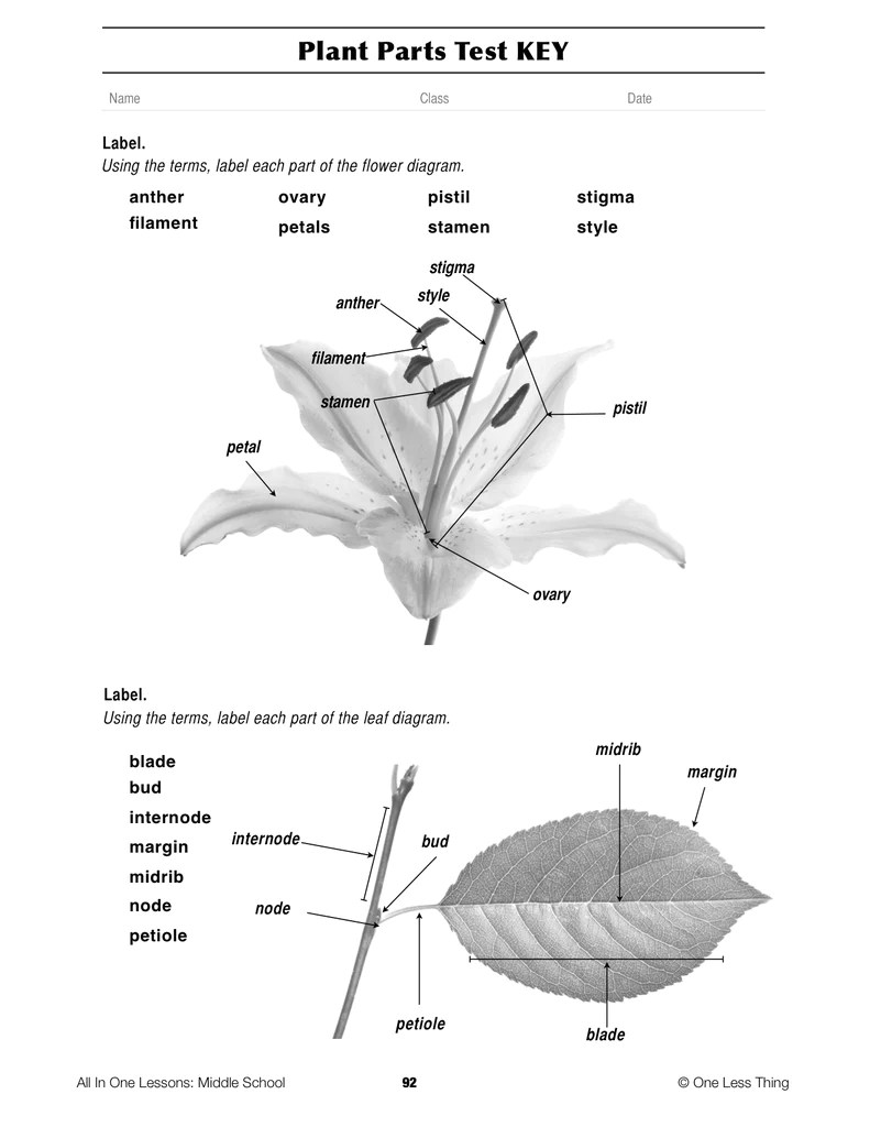 Basic Plant Parts And Functions