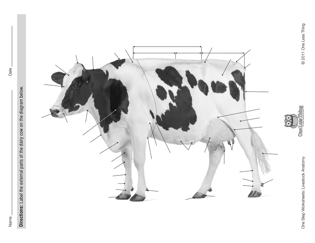 dairy cow parts diagram 2016 ford fiesta radio wiring livestock anatomy package powerpoint and worksheet
