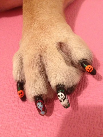 halloween dog nail art contest