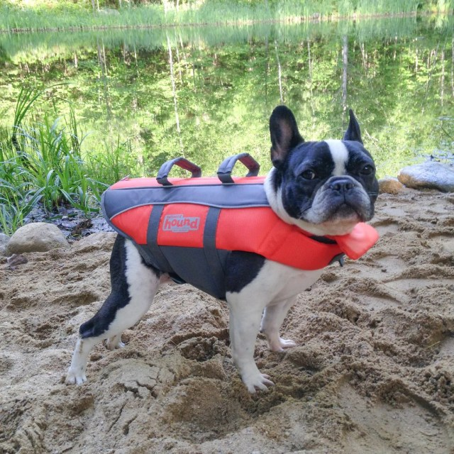 life jackets | french bulldog rescue network