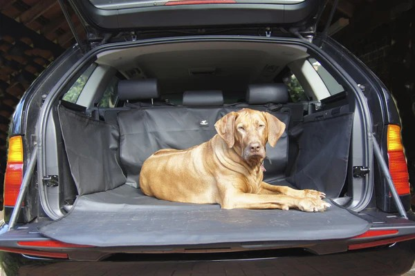 Running Dog Accessory Store  a boot liner to protect your