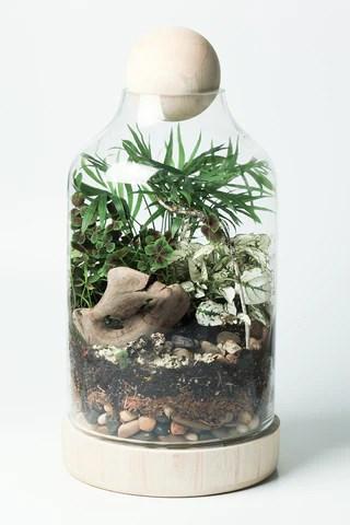 DIY Kits  twigterrariums