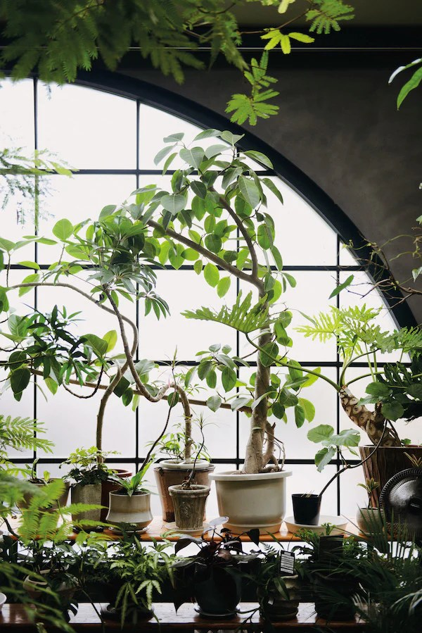 Indoor Green  Living with Plants  Mr Kitly