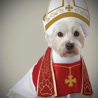 Holy Dog Costume  OddGifts.com