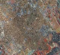 Getting Rid of Carpet Moths